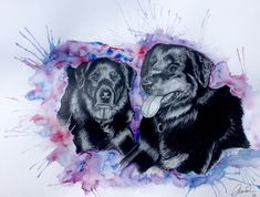 Hundeporträt in Aquarell und Bleistift Dogs, Movies, Movie Posters, Portraits, Animals, Art, Watercolour, Draw, Pencil