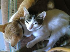 the white one was ging2, - kats' daughter.