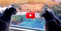This Kitty Conversation Is Totally Hilarious. If Only There Were Subtitles! | The Animal Rescue Site Blog