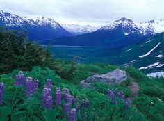 alaska pictures | Alaska's Exit Glacier Trail: a scenic hike thousands of miles from L.A ...