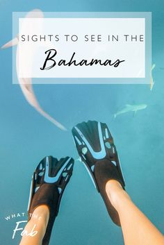 The Bahamas are filled with adventure and gorgeous sights to see! There are so many fun activities to try out while you're there! The possibilities are endless and you'll never want to leave!  bahamas travel guide | bahamas trip | bahamas travel tips | bahamas travel | bahamas vacation | bahamas vacation things to do | bahamas things to do in | bahamas things to do  #bahamastravelguide #bahamastrip #bahamastraveltips #bahamasvacation #bahamasvactionthingstodo #bahamasthingstodoin #bahamasthingto