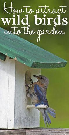 How to attract wild birds into the garden
