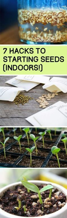 Seed Gardening, Seed Hacks, Seed Starting Hacks, Gardening, Vegetable Garden, He....  See more by visiting the photo