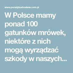 W Polsce mamy ponad 100 gatunków mrówek, niektóre z nich mogą wyrządzać szkody w naszych ogrodach. Najczęściej spotykanymi mr&oacut...