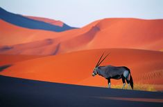 Namibia Travel Guide: Essential Facts and Information