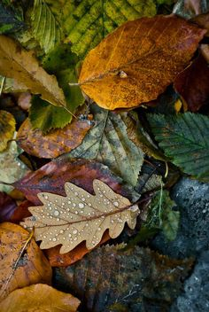 Beautiful Autumn Leaves - Artificial ones like this at Shelf Edge - www.shelf-edge.co.uk.