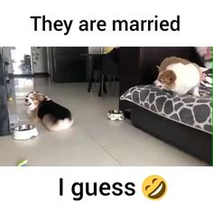 I wonder what he did lol😂maybe ate her dog biscuit lol. He's gonna have to get her two now lol! Funny Dog Memes, Funny Animal Memes, Funny Animal Videos, Cute Funny Animals, Funny Animal Pictures, Cute Baby Animals, Funny Cute, Cute Dogs, Hilarious