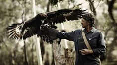 'I really fell for Grace,' says Don Hany.' He's talking about wedge-tailed eagles, the creatures with which he shares the screen in a new Australian film, Healing, now shooting near Kyneton. Xavier Samuel, Wedge Tailed Eagle, Hugo Weaving, Film Base, Game Birds, Saved By Grace, Birds Of Prey, Eagles, Bald Eagle