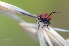 Al acecho - en plena floración,, los insectos muestran sus armas