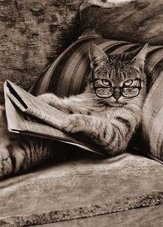 Vintage Cat Reading Newspaper