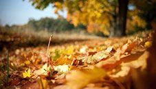 Orange Autumn Leaves