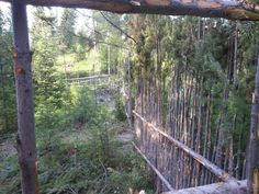 junkpole fence: freaky cheap chicken/deer fence made from wood typically thrown away (Fencing forum at permies)