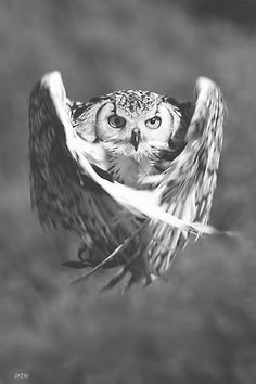 Fascinating stop-motion shot. The owl's movement is captured beautifully even though it isn't moving!