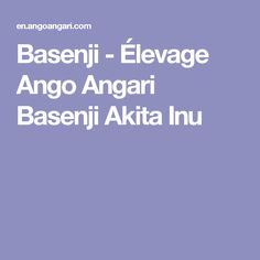 Basenji  - Élevage Ango Angari Basenji Akita Inu