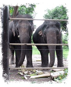Elephant Refuge | Wildlfe Friends Foundation Thailand