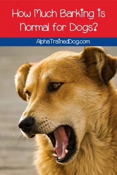What is considered excessive dog barking? What's considered normal? Read on to find out the answers to both questions & more.