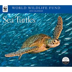 Sea Turtles WWF Wall Calendar: After more than 200 million years of existence, six of the seven species of sea turtle are listed on the IUCN Red List as Endangered or Critically Endangered. As soon as they hatch, they must run for their lives in a mad dash for the sea.  $13.99  http://calendars.com/Reptiles-and-Frogs/Sea-Turtles-WWF-2013-Deluxe-Wall-Calendar/prod201300002776/?categoryId=cat420002=cat420002#