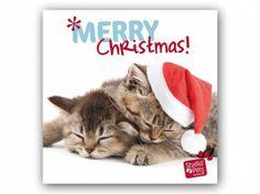 Hunderassen WeihnachtskartenMyrna Weihnachtskarte: Xmas Katze - Kitten