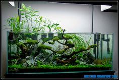 ADA Tank ... http://images54.fotki.com/v514/photos/4/1503564/9878117/IMG_0173-vi.jpg