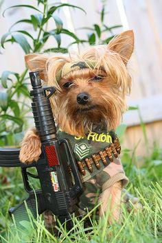 Rambo starring Sarg Rubin.....box office hit...Explored