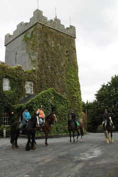 Wild Atlantic Way, Trek, Castle, Street View, Horses, Website, Holiday, Vacations, Horse