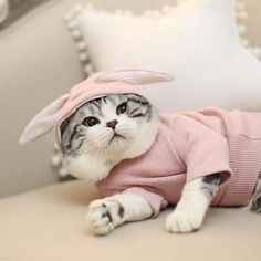Try new rabbit style hoodies for you cat! Try new rabbit style hoodies for you cat! Cat Lover Gifts, Cat Gifts, Cat Lovers, Gifts For Cats, Cat Diseases, Cheap Pets, Cat Shedding, Outdoor Cats, Pet Costumes