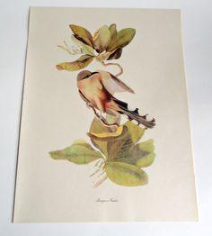 Audubon Bird Print For Framing Mangrove Cuckoo Print 1940's Birds of America by treasurecoveally on Etsy