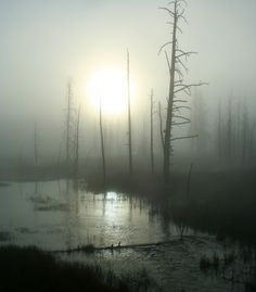 """Came upon this eerie scene at sunrise in Yellowstone National Park. Dense fog due to the many hot water pools and gyesers and a very crisp, cool fall morning created this mystical scene."" (From: 35 Spectacular Sunrises from Around the World)"
