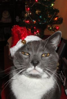Just like Santa - white mustache and beard!  lol   ;) For more fun holiday cats, visit https://www.facebook.com/funholidaycats