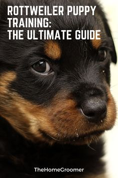How Dogs And Puppies Learn, A Guide To Dog Training – Puppy Training Puppy Training Classes, Puppy Training Tips, Crate Training, Training Your Dog, Training Pads, Leash Training, Toilet Training, Training Equipment, Potty Training