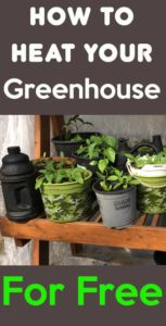 How to heating a greenhouse for free this are some cheap and free ways to heat your greenhouse in the winter or spring Free heat Greenhouse heating greenhouse heat heatgreenhouse greenhouseheat wintergreenhouse grow growinwinter free freeheat plastic Diy Greenhouse Plans, Heating A Greenhouse, Greenhouse Supplies, Outdoor Greenhouse, Cheap Greenhouse, Greenhouse Growing, Greenhouse Gardening, Greenhouse Wedding, Homemade Greenhouse