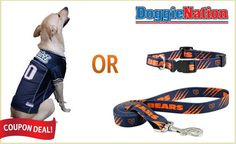 save 40% on a NFL Jersey ORa collar and leash set for your dog. $16