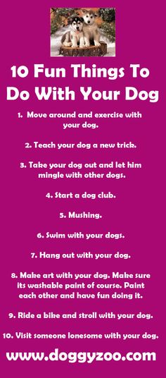 10 Fun Things To Do With Your Dog
