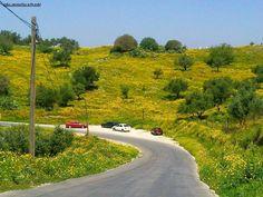 اربــــــــــد - طريق ام قيس باتجاه الشونه الشمالية بعدسة : موفق نعواشي Road from Um Quais toward North Shuna, Irbid, Jordan