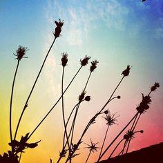 grass silhouette  #Instagram #coloriseverywhere