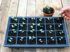 How to Start a Vegetable Garden This Spring --> http://www.hgtvgardens.com/vegetable-garden/how-to-start-a-vegetable-garden?soc=pinterest
