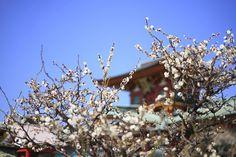 【山口県 防府天満宮】学問の神様としてあがめられている菅原道真を祀った「日本最初の天満宮」です。京都の北野天満宮、福岡の太宰府天満宮とともに日本の三天神といわれ、多くの参拝客を集めています。 http://www.oidemase.or.jp/db/a/detail.php?id_num=35206aa0000002912 #Yamaguchi_Japan #Setouchi