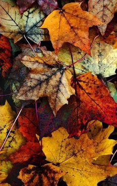 leaves, autumn, rain, colors