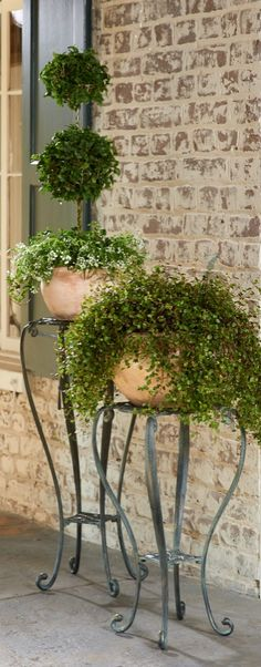 This refined Florentine Garden Collection handsomely showcases your favorite plants.