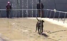 Daily Cute: Dog Leaps Through Fountain   Care2 Causes