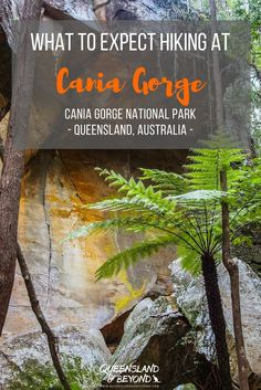 "Cania Gorge in Central Queensland is supposedly a ""mini Carnarvon Gorge"" with an impressive gorge, sandstone rock formations, Aboriginal rock art, hiking trails, camping and more. We were somewhat underwhelmed, and left feeling a bit disappointed. Here's why.  Queensland & Beyond. #australia #hiking #queensland #caniagorge #camping"