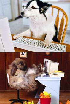 Geeky animals using computers. (okai so der not kittehs...but dey cute)