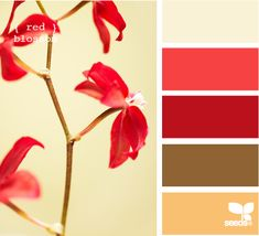 Laundry room color inspiration