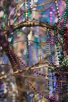 A Mardi Gras bead tree on St. Charles Avenue in #NOLA! <-- Gotta love Nawlins'! #partypartyparty #howappropriate
