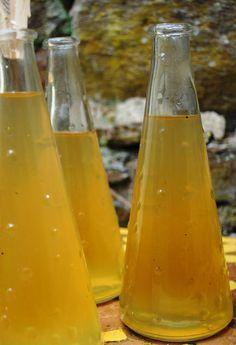 In a village called Segur le Chateau....: Dandelion Syrup Recipe