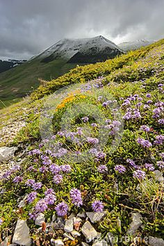 Wild mountain flowers in a green field - National park of Sibillini mountain, umbria - Italy. Photo by Elisa Bistocchi