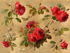 red roses and butterflies-Paul de Longpre