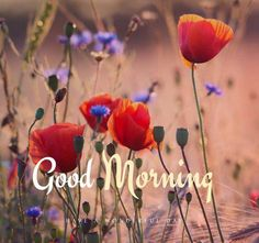 Everyone likes good morning images. If you too are searching for good morning images with flowers, then you have come to the right place. We provide good morning images on our website. Good Morning Friday Pictures, Good Morning Photos Download, Good Morning Image Quotes, Good Morning Inspiration, Good Morning Picture, Good Morning Greeting Cards, Good Morning Greetings, Good Morning Wishes, Good Morning Massage