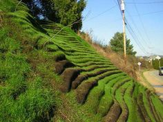 living retaining wall via  geotextile materials. Basically, loosely woven bags filled with a growing medium can be stacked to form walls that then support plant growth.