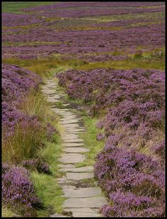 Heather moor          Terry Roberts